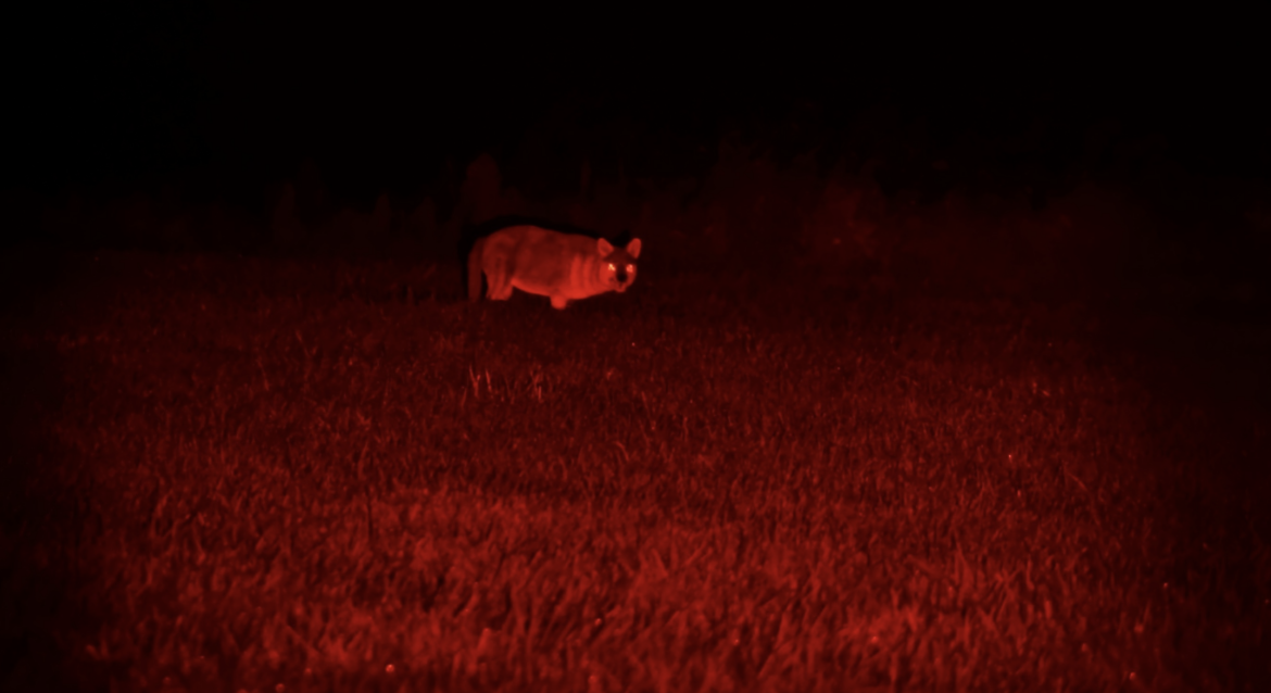 Best coyote hunting lights in night