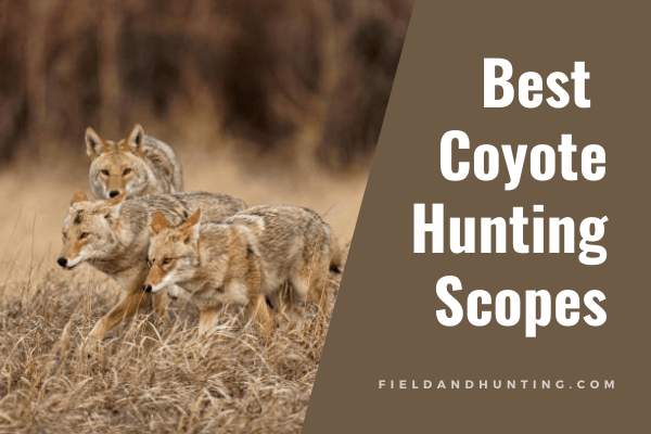 Best Coyote Hunting Scopes