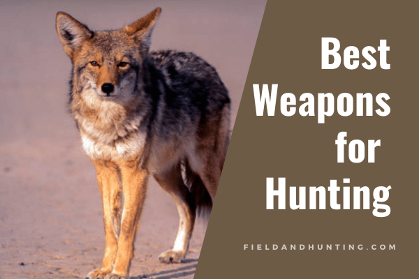 Best weapons for hunting