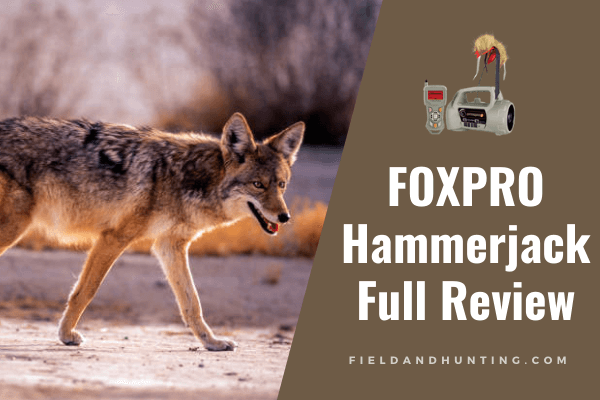 foxpro hammerjack 2 review