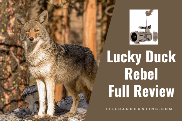 Lucky Duck Rebel Review