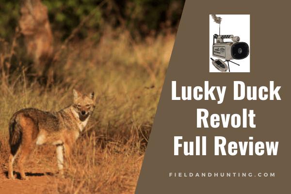 Lucky Duck Revolt Review