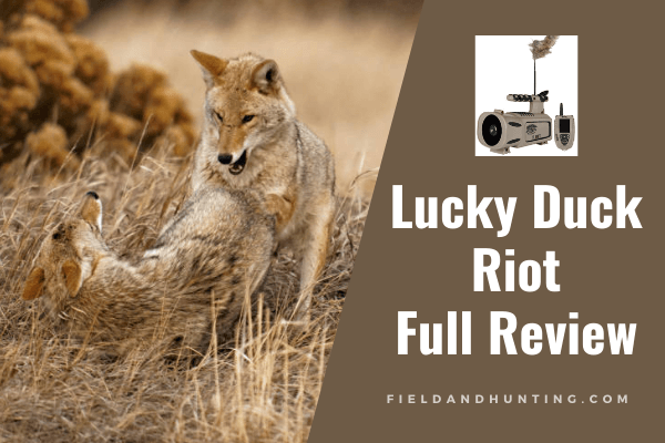 Lucky Duck Riot Review
